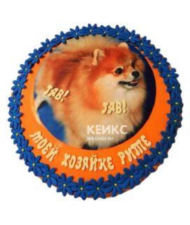 Торт Шпиц 1