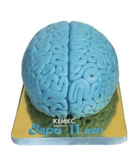 Торт мозги 9