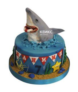 Торт акула 6